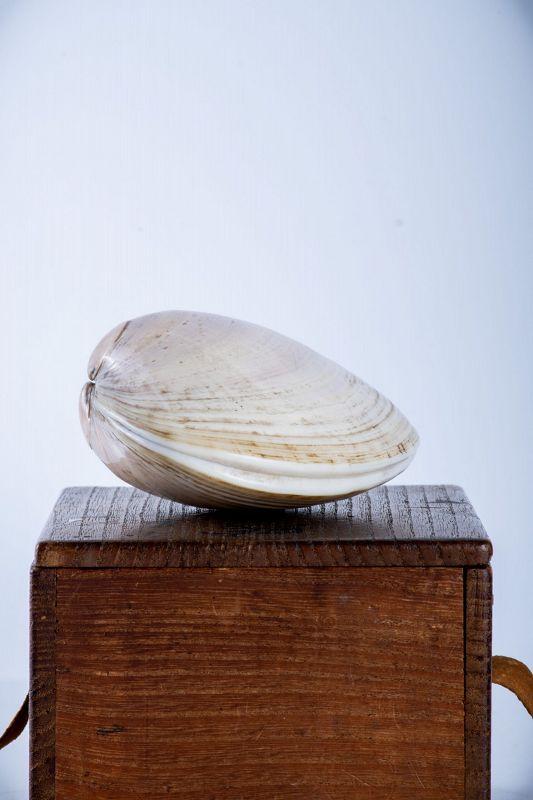 A Japanese shell box