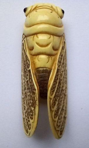NETSUKE: Genuine MEIJI Cicada Ivory Netsuke