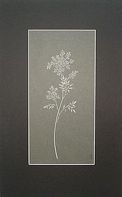 PAPER CUT-OUT OF QUEEN ANNE�S LACE