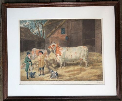 Mezzotint engraving, Holderness Cow, London 1798