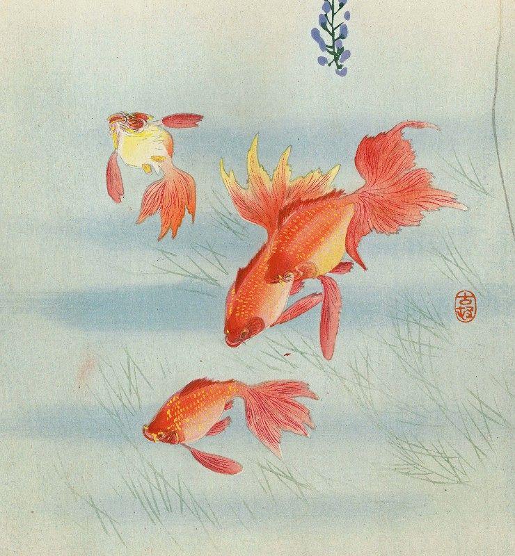 Ohara Koson Woodblock Print - Three Goldfish & Wisteria -Rare SOLD