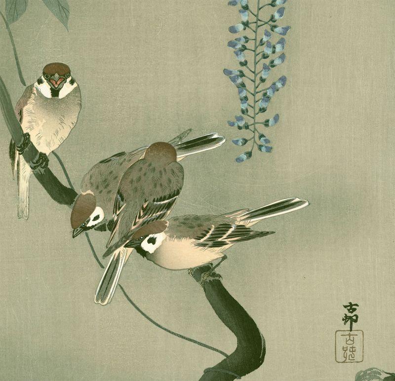 Ohara Koson Japanese Woodblock Print - Sparrows and Wisteria SOLD