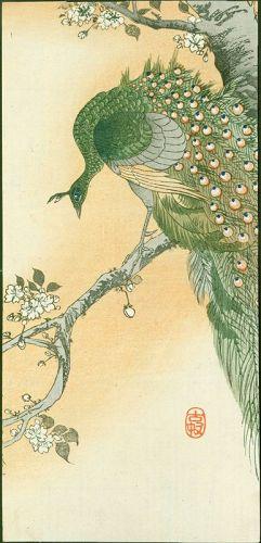 Ohara Koson Japanese Woodblock Print - Peafowl on Flowering Cherry
