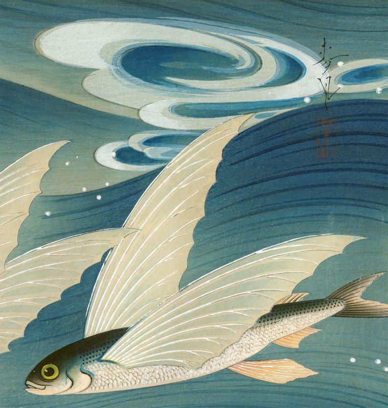 Ohno Bakufu Woodblock Print - Flying Fish (Tobiuo) - Ltd. Ed. SOLD