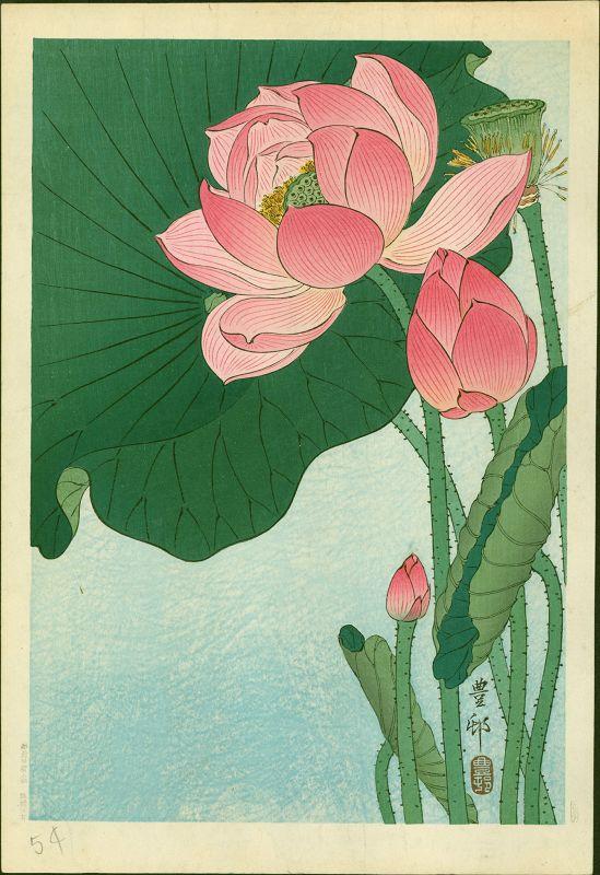 Ohara Koson (Hoson) Japanese Woodblock Print -  Flowering Lotus