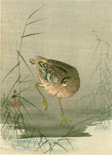 Ohara Koson Japanese Woodblock Print - Snipe at Waterside 1910 SOLD
