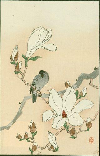 Yamagishi / Ohara Koson Woodblock Print- Bird and Magnolia 1910