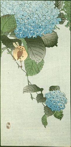 Kono Bairei - Ohara Koson Woodblock Print - Sparrow on Hortensia1910