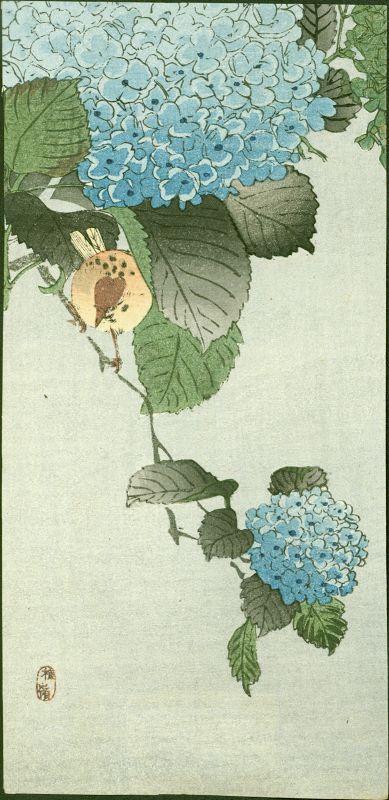 Kono Bairei/Ohara Koson Woodblock Print - Sparrow on Hortensia -1910
