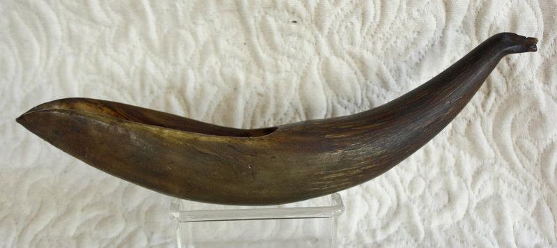 large carved Yak horn for farm animal medicine