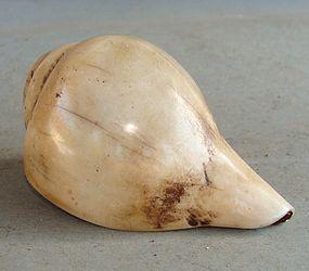 Tibetan Shell Trumpet