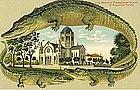 German Postcard, Alligator Border, St. Augustine