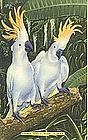 Linen Postcard, Two Cockattoos , Parrot Jungle, Miami