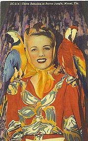 """Three Beauties in Parrot Jungle"""