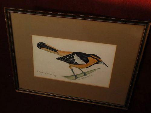 WILLIAM JOSEPH SCHALDACH (1896-1982) American well listed wildlife art watercolor of bird