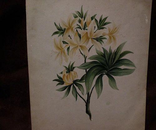 American botanical drawing 19th century folk art extremely detailed