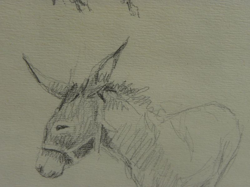 "MARYSIA DONALDSON (-2018) beautiful study drawings of donkey ""Alistair"" by noted Scottish artist"
