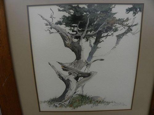 JAMES MARCH PHILLIPS 1913-1981 watercolor California Monterey cypress