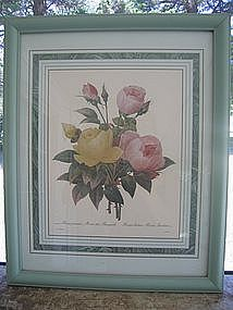 Redoute Rose Print