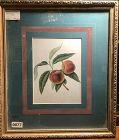 Delight Fruit Lithograph Nineteenth Century Botanical