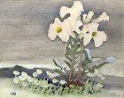"""Artist Keith Henderson, Scotland """"Incar;illea"""" watercolor"""
