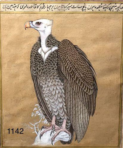 Persian illuminated Manuscript �Falcon� watercolor
