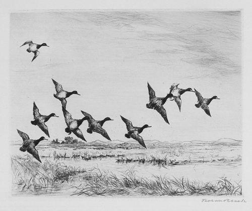 """""""Little Bluebills"""", etching, Roland Clark, 1927."""