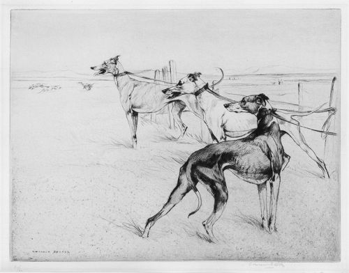George Vernon Stokes, etching, Greyhounds