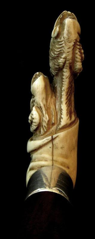 Great Ivory Monkey Walking Stick