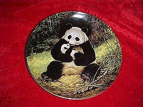The Panda, Last of their kind, The endangered Species