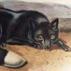 FOX AMERICAN BLACK Audubon Quadrupeds America Antique New York