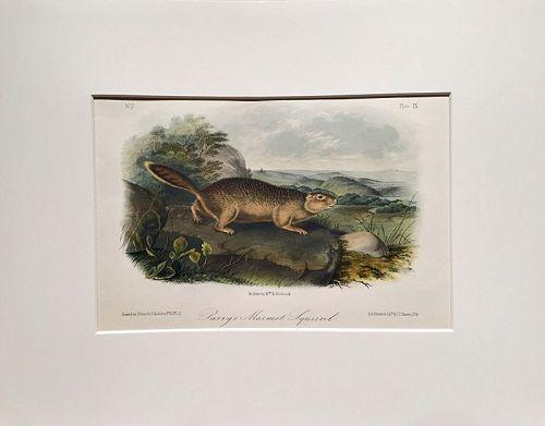 SQUIRREL PARRYS MARMOT Lithograph John Audubon Quadruped Royal Octavo