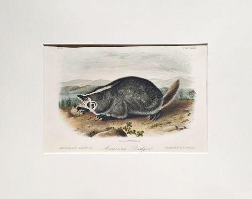 BADGER AMERICAN Lithograph John Audubon Quadruped Royal Octavo