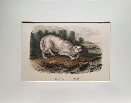 WOLF WHITE AMERICAN Lithograph John Audubon Quadruped Royal Octavo