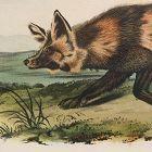 FOX JACKAL Lithograph John Audubon Quadruped Royal Octavo Antique