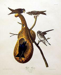 MARTIN PURPLE John Audubon Birds America Amsterdam 1972 New York