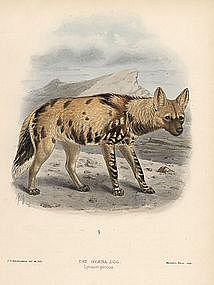 HYENA DOG Monograph Canidae Mivart Keulemans 1890 London