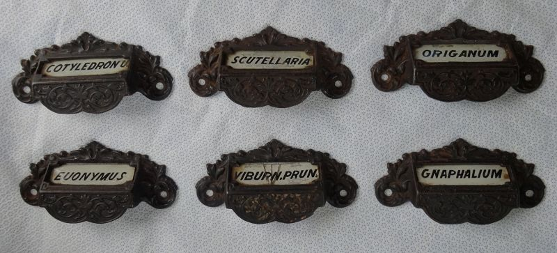 6 Fabulous Victorian Label Under Glass Apothecary Cabinet Drawer Pulls