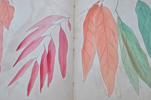 BOTANICAL DRAWINGS