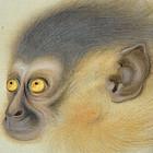 Baby Monkey Japanese Scroll by Ota Issai