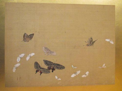 Butterflies and Moths, Edo Period Screen Painting by Watanabe Kiyoshi