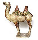 Fantastic Chinese Tang Dynasty Tomb Pottery Camel